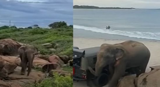 (VIDEO) Wild Elephant surprises beachgoers in Arugambay
