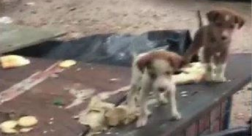 Activists claim abducted dogs in Colombo, sold for meat.