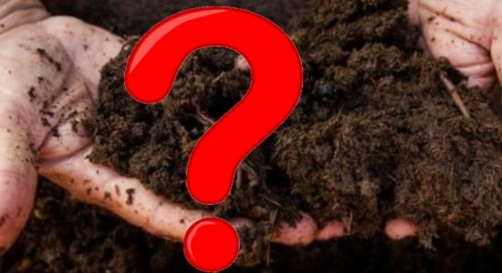 Plant-based pathogen threat to agriculture sector