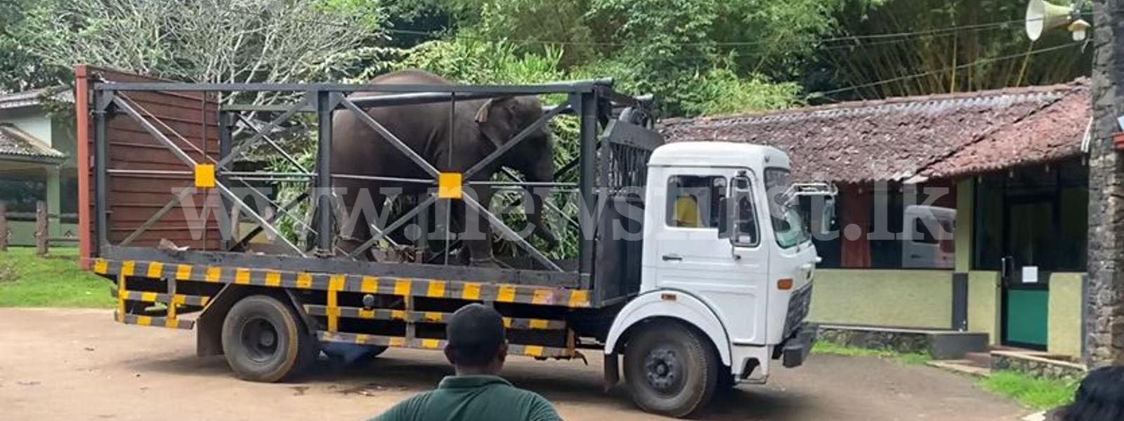 Detained Elephants returned to previous owners