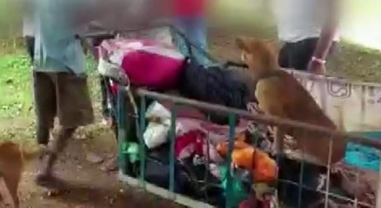 Colombo Dog abductors busted by activists for 2nd day (VIDEO)