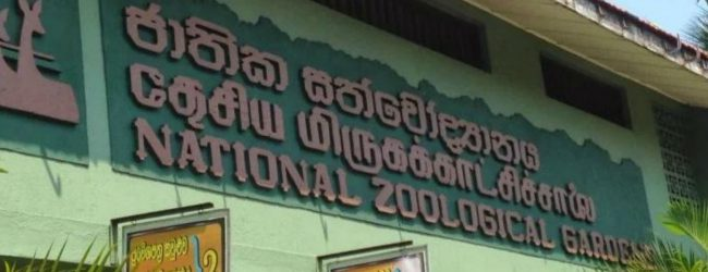 DG of Zoological Gardens Dept steps down in backdrop of Tame Elephant controversy