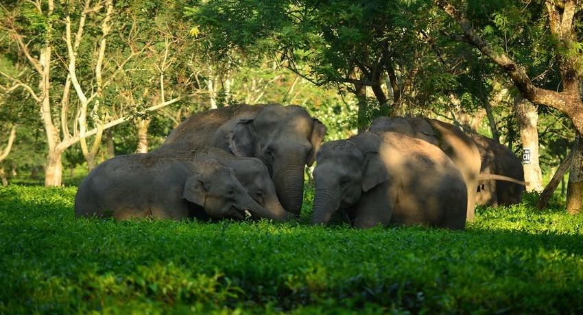 No more elephants to be held captive: Madras HC