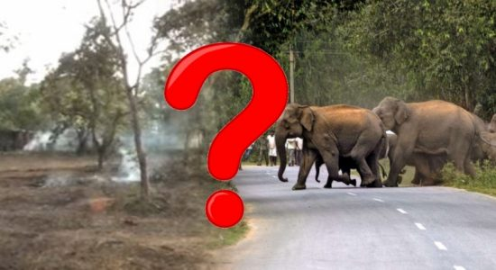 Driving School over Elephant Corridor?