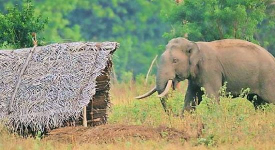 Struggle to survive kills humans, elephants in rural Sri Lanka