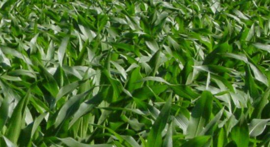 Govt to bring liquid fertilizer from India