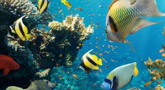 Sri Lanka mulls declaration of Sensitive Marine Protection Zone