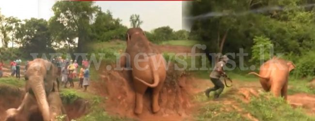(VIDEO) Wild Elephant rescued from deep trench