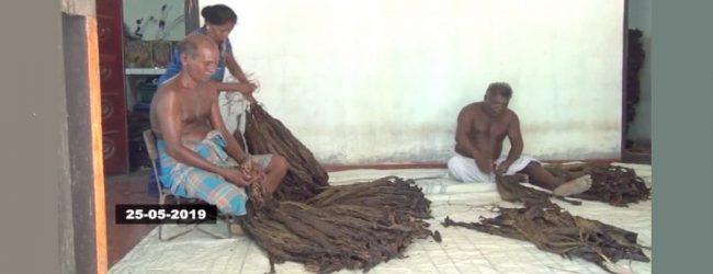 2020 ஆம் ஆண்டிற்குள் புகையிலை முற்றாகத் தடை: யாழில் பாதிப்புகளை எதிர்நோக்கியுள்ள செய்கையாளர்கள்