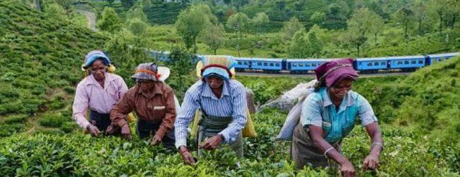 சுமார் 100 நாட்களுக்கான நிலுவைச்சம்பளம் வழங்கப்படவில்லை: தோட்டத் தொழிலாளர்கள் விசனம்