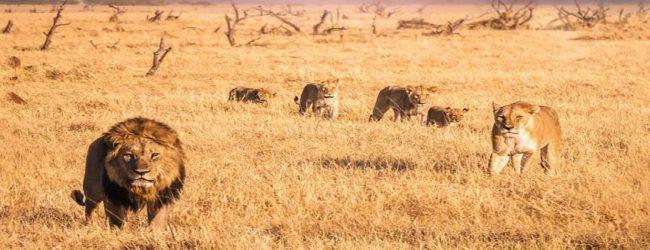 நாட்டின் பல பகுதிகளில் 150 மில்லிமீட்டர் வரை பலத்த மழை பெய்யக்கூடும்