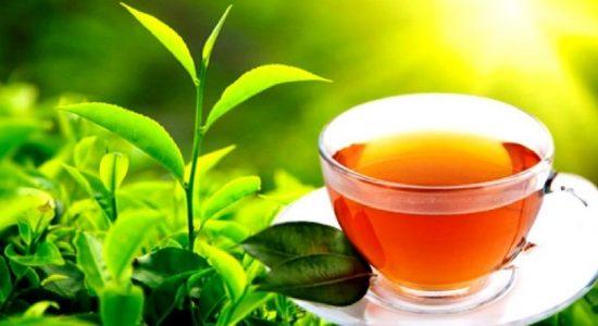 Ceylon Tea நாமத்தைப் பிரசித்தப்படுத்தும் வேலைத்திட்டம் மொஸ்கோவில் ஆரம்பம்