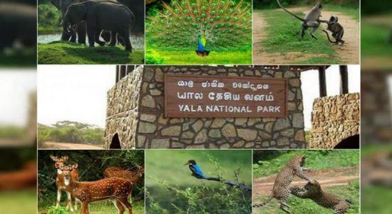 யால தேசிய பூங்கா மூடப்படவுள்ளது