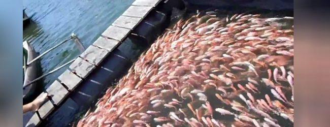 மீன்களின் தரத்தினைப் பாதுகாப்பது தொடர்பில் மீனவர்களுக்கு தௌிவூட்டல்