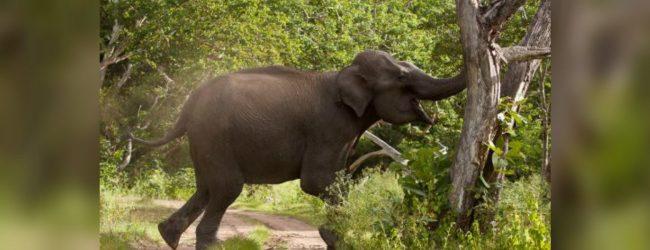 காட்டு யானைகளின் அச்சுறுத்தல் தொடர்பில் புலனாய்வு ரீதியில் மக்கள் சக்தி ஆய்வு