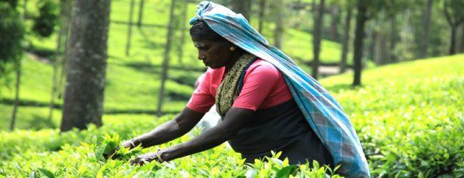 5 மாதங்களாகக் காத்திருந்த பெருந்தோட்டத் தொழிலாளர்களுக்கு இம்முறையும் ஏமாற்றம்