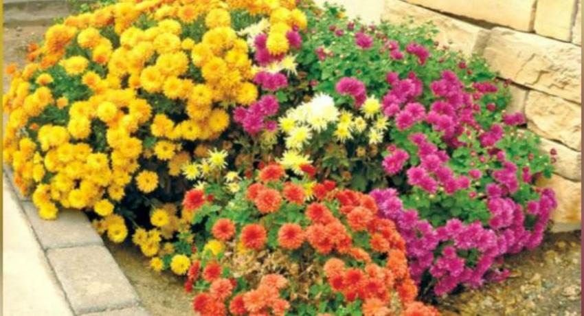 களுத்துறை உள்ளிட்ட பகுதிகளில் அலங்கார மலர் வளர்ப்பு வேலைத்திட்டம்