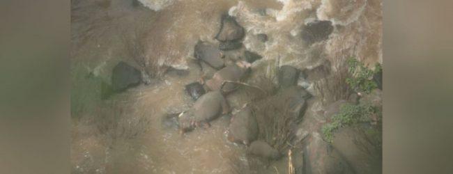 தாய்லாந்தில் நீழ்வீழ்ச்சியில் சிக்கி 6 யானைகள் உயிரிழப்பு