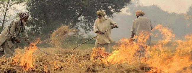 இந்தியாவில் தமது வயல் நிலங்களில் தீ மூட்டிய 80 விவசாயிகள் கைது