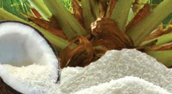 தெங்கு உற்பத்தி ஏற்றுமதிகளை மேம்படுத்த நடவடிக்கை