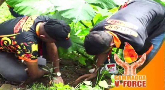 V-Force: இரத்தினபுரியில் மரநடுகை செயற்றிட்டம்