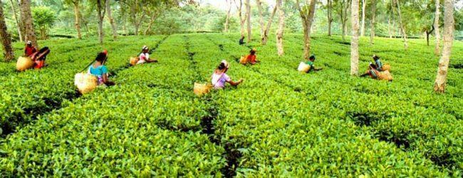 தோட்டத் தொழிலாளர்களின் சம்பள அதிகரிப்பு தொடர்பில் பேச்சுவார்த்தை