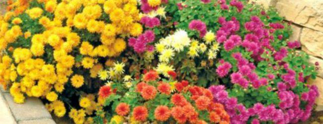 கண்டியில் அலங்கார மலர் வளர்ப்பை மேம்படுத்த திட்டம்