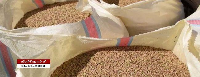 குறைந்த விலையில் நெல் கொள்வனவு: கிளிநொச்சி, அம்பாறை விவசாயிகளுக்கு பாரிய நட்டம்