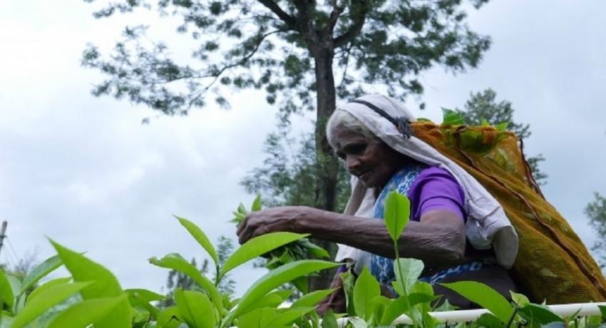 ஆயிரம் ரூபா சம்பள அதிகரிப்பிற்கான உடன்படிக்கையை கைச்சாத்திடுவதில் தாமதம்