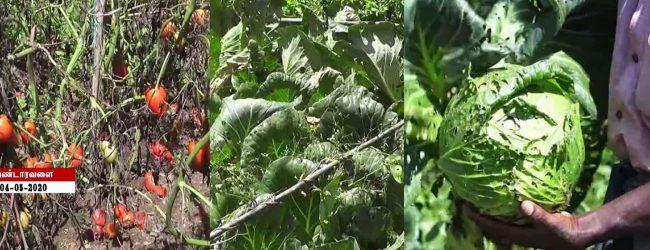 மரக்கறி விலை வீழ்ச்சி: பெரும் நட்டத்தில் விவசாயிகள்