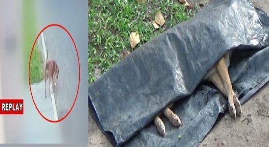 வெசாக் பூரணை தினத்தில் நீர்கொழும்பில் இடம்பெற்ற கொடூர சம்பவம்