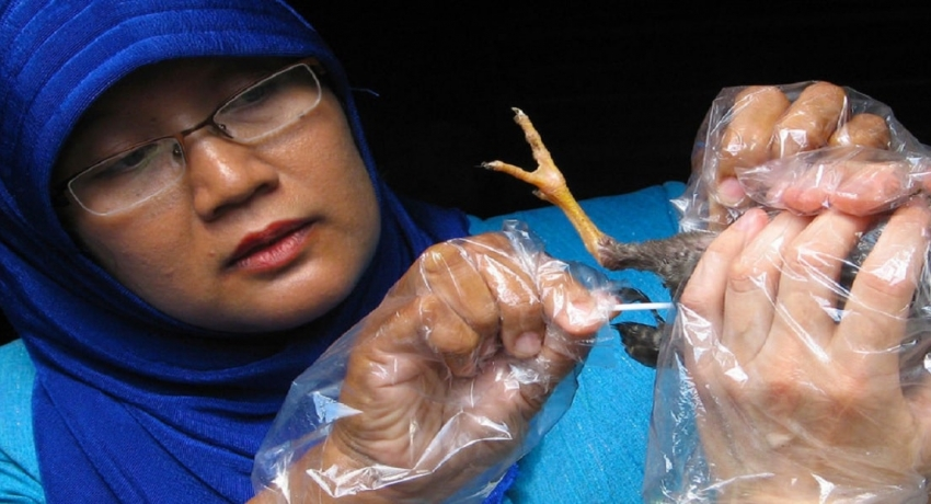 விலங்குகளிடமிருந்து நோய் பரவுவதைத் தடுக்காவிட்டால் வருடத்தில் 20 இலட்சம் பேர் உயிரிழக்க நேரிடும் என எச்சரிக்கை