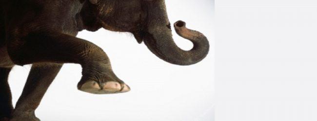 கிளிநொச்சியில் காட்டு யானையில் தாக்குதலுக்குள்ளான பல்கலைக்கழக விரிவுரையாளர் உயிரிழப்பு