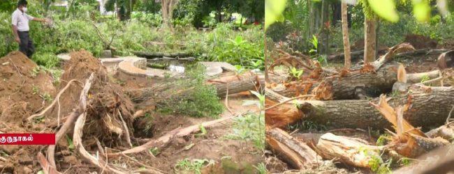 குருநாகல் ரஜபிஹில்ல பூங்காவில் நூற்றாண்டு பழைமையான 32 மரங்கள் வெட்டி அழிப்பு