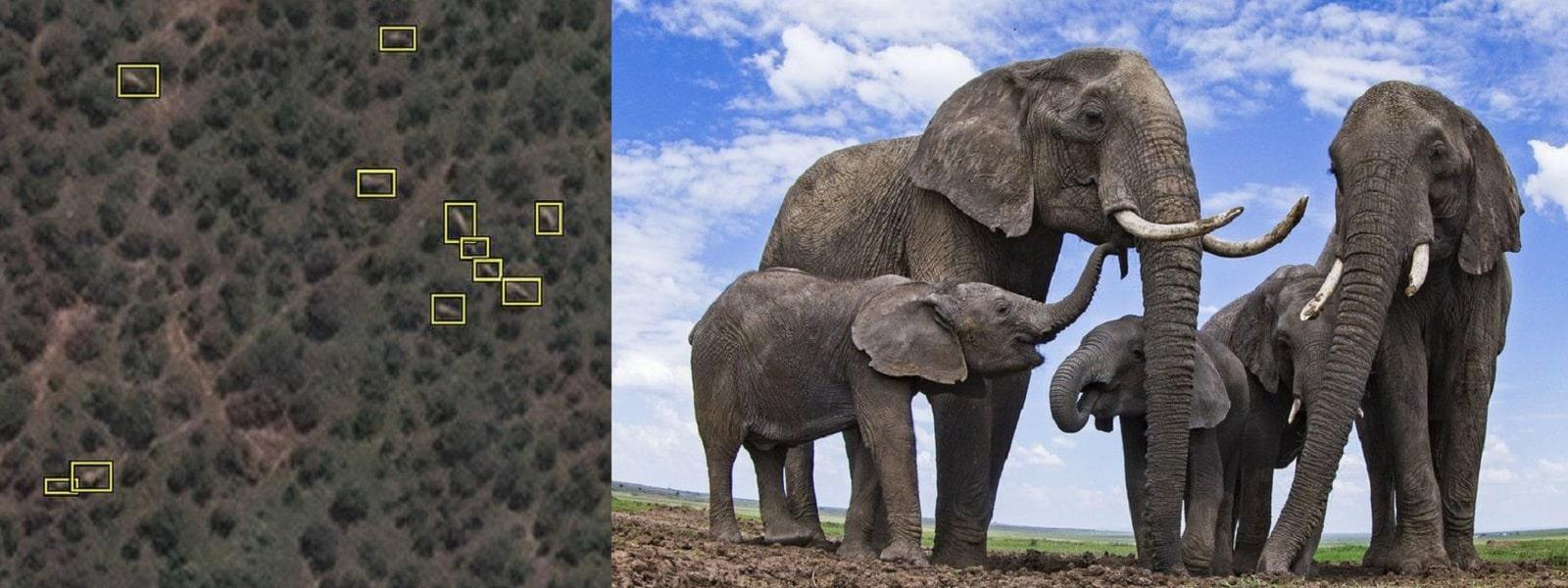 விண்வெளியில் இருந்து காட்டு யானைகளை எண்ணும் தொழில்நுட்பம் அறிமுகம்
