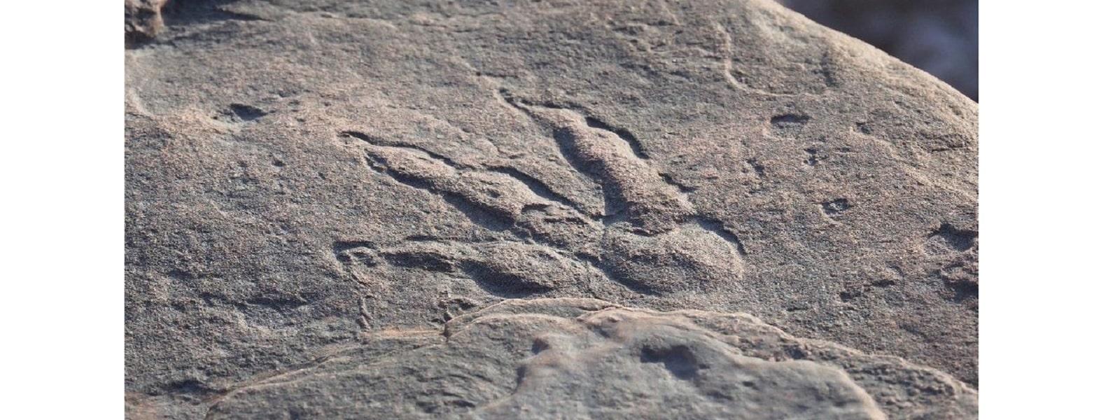 பிரித்தானியாவில் 4 வயது சிறுமியால் 22 கோடி ஆண்டுகள் பழமையான டைனோசரின் காலடித் தடம் கண்டுபிடிப்பு