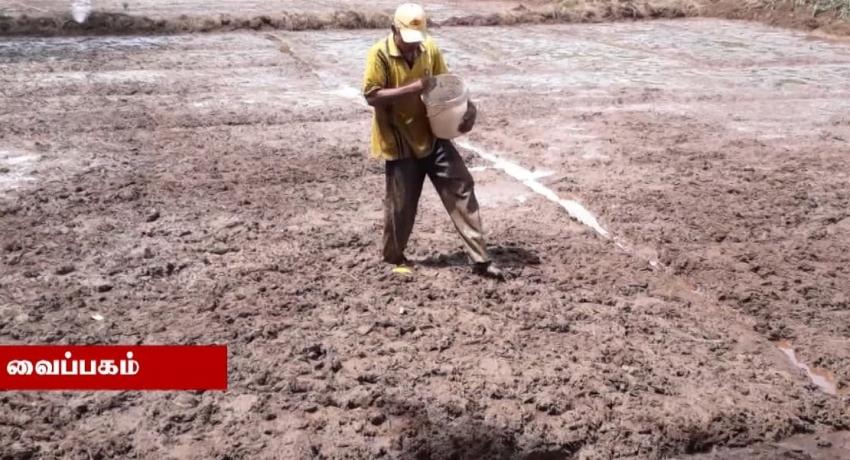 கைவிடப்பட்ட 50,000 ஏக்கர் வயல் காணிகளில் மீண்டும் பயிர்ச்செய்கை