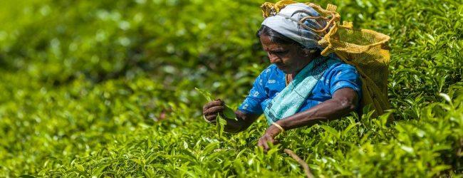 1000 ரூபா கொடுப்பனவை இன்று முதல் வழங்க வேண்டும்: தொழில் ஆணையாளர் தெரிவிப்பு