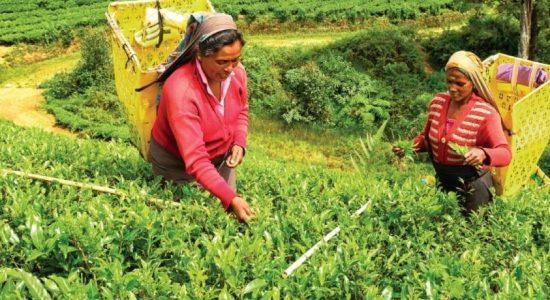நாளாந்த சம்பளமாக 1,000 ரூபா வழங்காத தோட்ட நிறுவனங்களுக்கு எதிராக சட்ட நடவடிக்கை