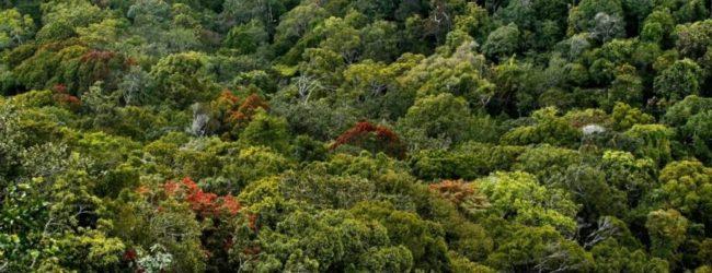 நீர்த்தேக்கங்களை நிர்மாணிப்பதால் சிங்கராஜ வனத்திற்கு பாதிப்பு ஏற்படக்கூடும்: UNESCO தெரிவிப்பு