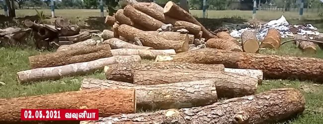 வவுனியாவில் பாரிய மரக் கடத்தல் முயற்சி பொலிஸாரால் முறியடிப்பு