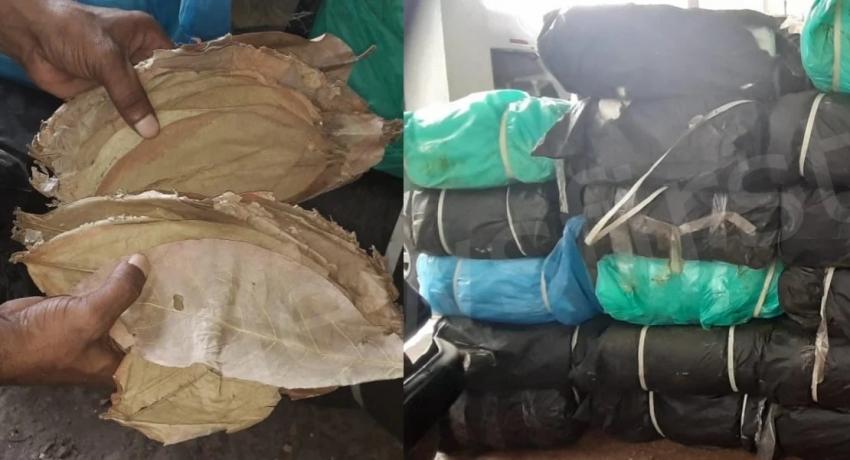 1 கோடியே 20 இலட்சம் ரூபா மதிப்புள்ள பீடி இலைகளுடன் 6 பேர் கைது