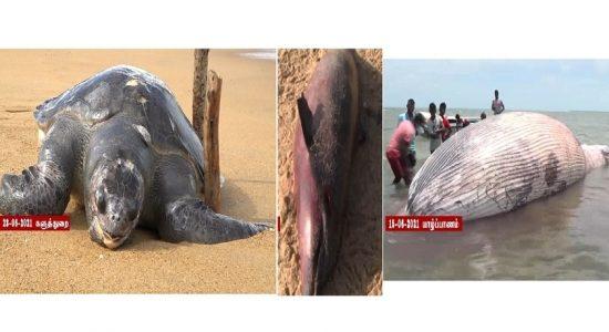 MV X-Press Pearl கப்பலின் இரசாயனக் கசிவே கடல்வாழ் உயிரினங்களின் இறப்பிற்கு காரணம்: நீதிமன்றில் அறிவிப்பு