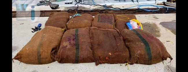 பருத்தித்துறை கடற்பரப்பில் 71 மில்லியன் ரூபா பெறுமதியான கேரள கஞ்சா கைப்பற்றல்