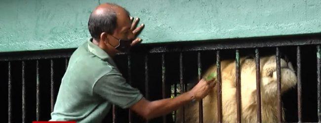 அத்தியாவசிய பெயர்ப்பலகையை காட்சிப்படுத்தி மாடுகளை கடத்த முயன்றவர் கைது