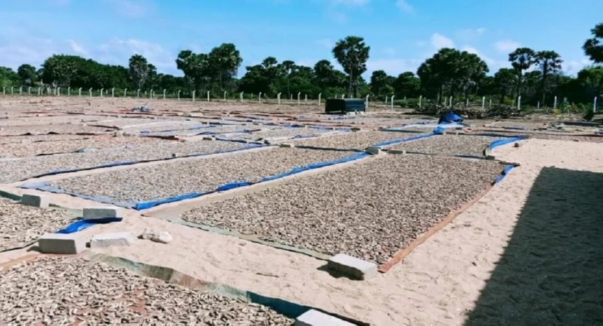 மன்னாரில் 9,100 கிலோகிராம் உலர்ந்த கடலட்டை பறிமுதல்